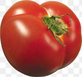 Tomato - Plum Tomato PNG