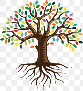 Tree Plan - Tree Root Color Clip Art PNG