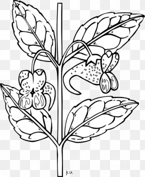 Black And White Plants - Plant Black And White Clip Art PNG