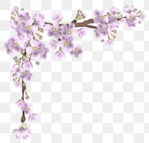 Floating Cherry Border Material - Clip Art PNG