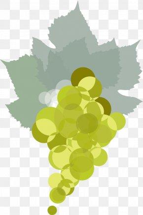 Summer Wine Border Grape - Grape Leaves Common Grape Vine Leaf Illustration PNG