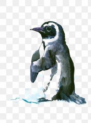 Penguin - Penguin Bird Antarctic Drawing Painting PNG