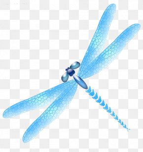 Blue Dragonfly - Dragonfly Blue Icon PNG