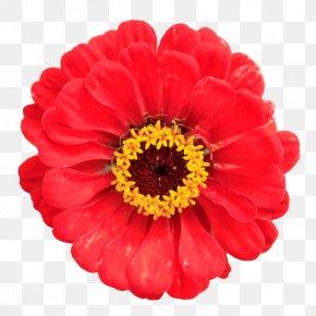 Red Flower - Flower Desktop Wallpaper Stock Photography Clip Art PNG