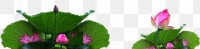 Lotus Decorative Pattern - Tulip Flora Plant Stem Leaf Bud PNG