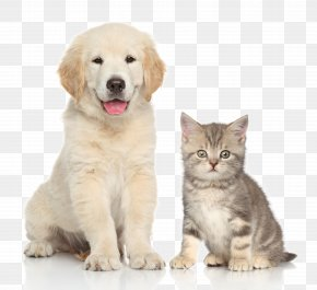 Pet Cat And Dog - Dog Cat Kitten Pet Sitting PNG