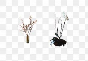 Plum Pot - Bonsai Plum Blossom Moth Orchids PNG