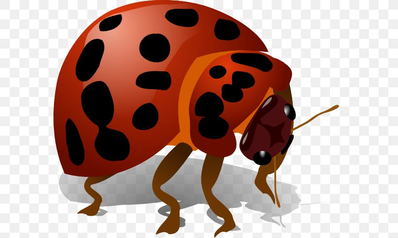 Beetle Clip Art, PNG, 600x491px, Beetle, Arthropod, Heartbleed, Insect, Invertebrate Download Free