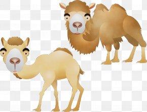 Bactrian Camel Fawn - Animal Cartoon PNG