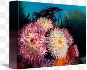 Anemone - Coral Reef Marine Biology Sea Anemone Invertebrate PNG