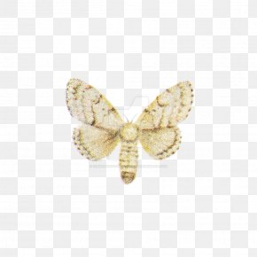 Moth - Butterfly Insect Pollinator Moth Brooch PNG