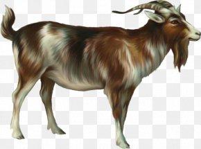 Goat - Ahuntz Goat Sheep PNG