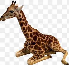 Cheetah - Northern Giraffe Bird Common Ostrich Animal Deer PNG