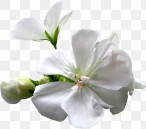 Apricot - Blog White 56.com Clip Art PNG