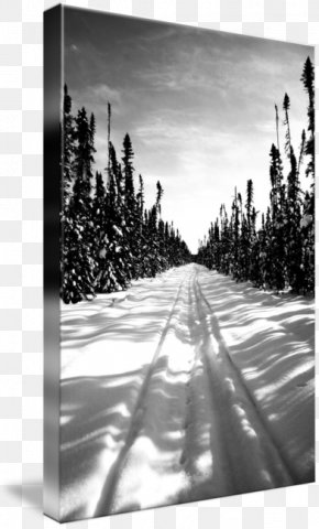 Winter Landscape - Gallery Wrap Canvas Winter Art Photography PNG