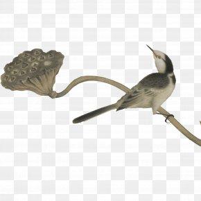 Birds - Bird Woodpecker Gratis PNG