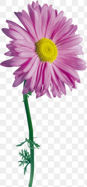 Flower - Flower Drawing Photography Clip Art PNG