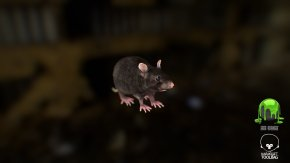 Rat & Mouse - Rat Murids Low Poly Mouse Rendering PNG