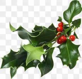 Christmas - Christmas And Holiday Season Mistletoe Christmas Decoration Gift PNG
