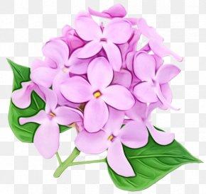 Moth Orchids Chrysanthemum Flower Clip Art PNG