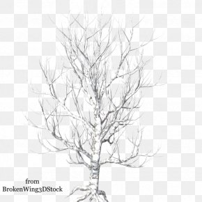 Winter Tree - Tree Branch Photography Clip Art PNG