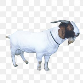Goat - Sheep Goat Livestock PNG