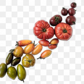 Web Design - CurlyHost LLC Web Design Food Tomato PNG