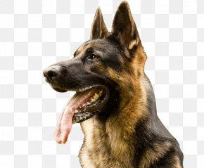 Barking Dog - German Shepherd Pit Bull Puppy Dutch Shepherd Shiloh Shepherd Dog PNG