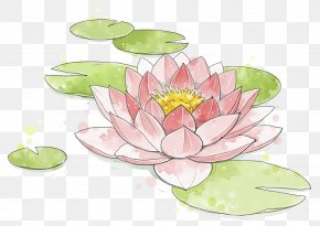 Lotus Watercolor Painting - Watercolor Painting Nelumbo Nucifera PNG