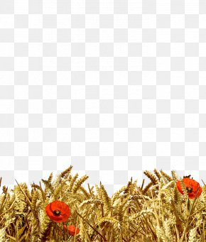 Spighe Di Grano - Wheat Ear Cereal Harvest Gunny Sack PNG