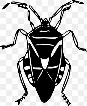 Insect - Insect Firefly Clip Art PNG