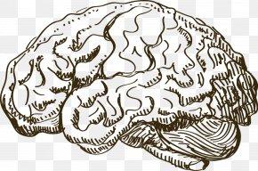 Brain - Brain Euclidean Vector Information PNG