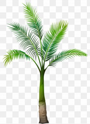 Palm Tree Image - Palm Trees Clip Art PNG