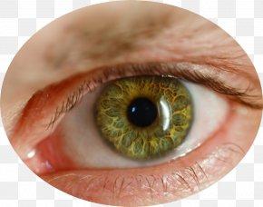 Eye - Human Eye Retina PNG
