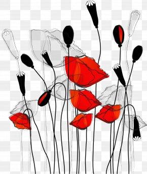 Line Poppy Illustration - Common Poppy Curtain Flower Wallpaper PNG