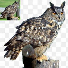 Omg - Great Horned Owl Bird Clip Art PNG