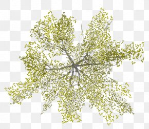 Tree Top View - Tree Architecture PNG