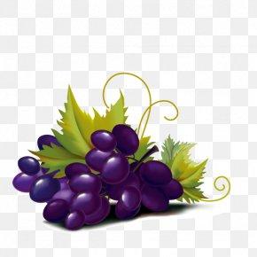 Purple Grape - Violet Grape Color Illustration PNG