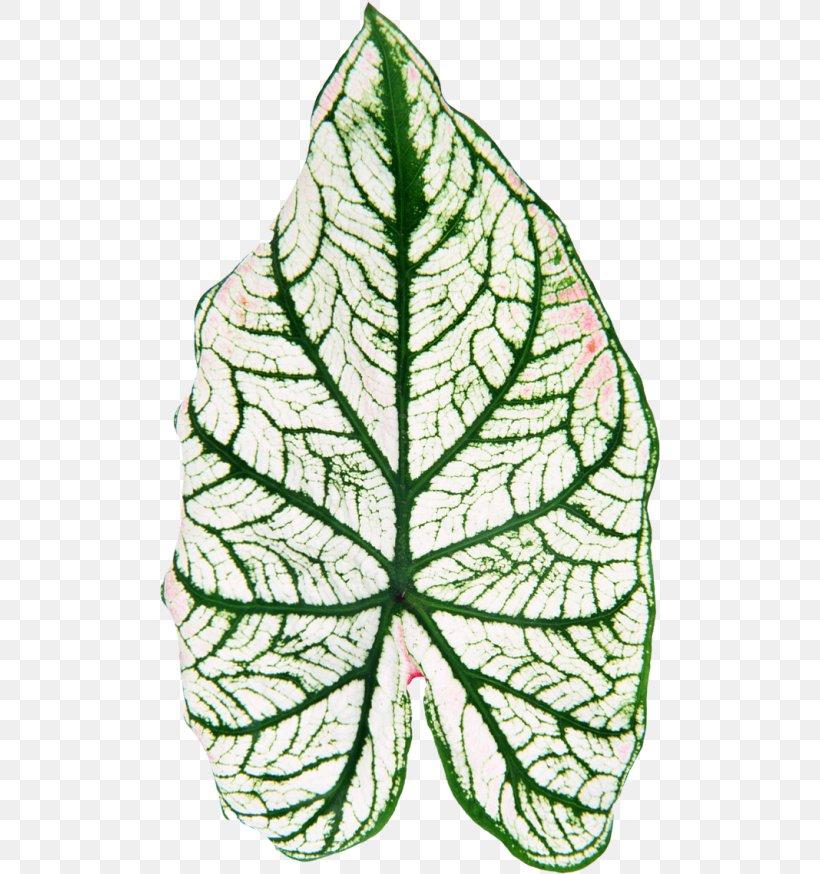 Leaf Plant Stem Flower Clip Art, PNG, 500x874px, Leaf, Branch, Flora, Flower, Houseplant Download Free
