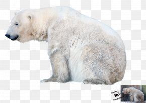 Polar Bear - Polar Bear Desktop Wallpaper Clip Art PNG