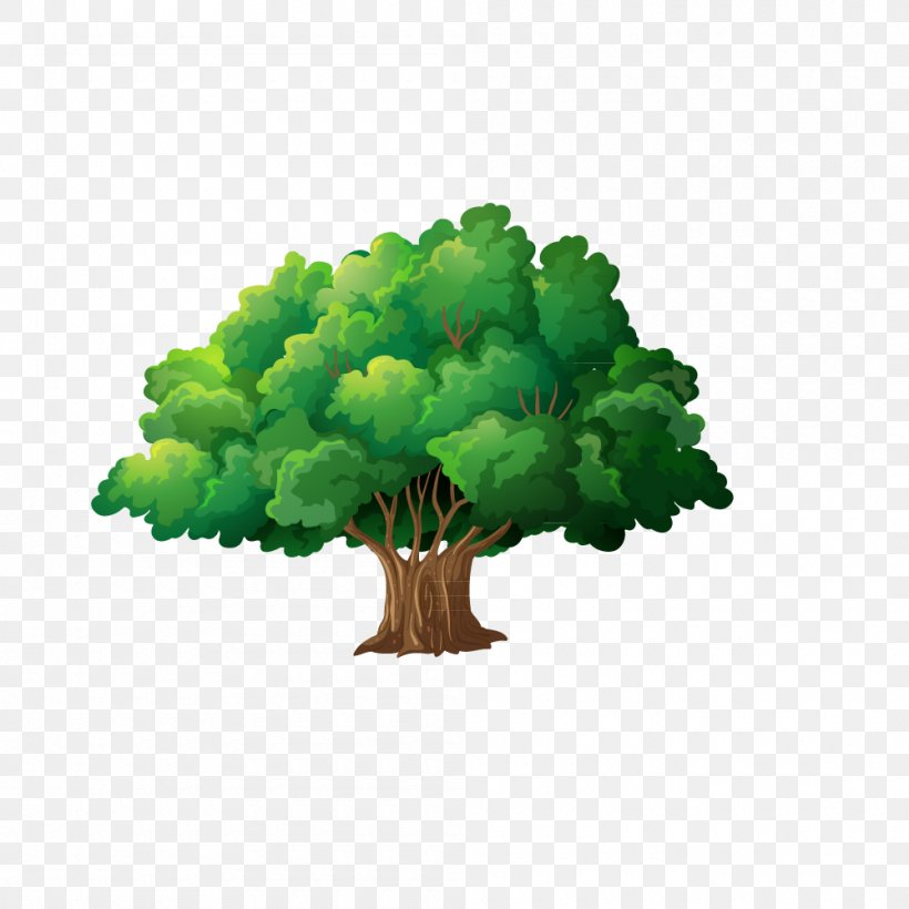 Trees, PNG, 1000x1000px, Family, Family Tree, Flowerpot, Fotosearch, Grass Download Free