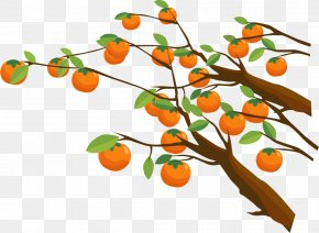 Vector Painted Persimmon Tree - Persimmon Tree Euclidean Vector PNG