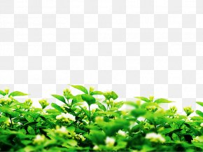 Spring Planting Green - Microsoft PowerPoint Image File Formats Image File Formats Plants PNG