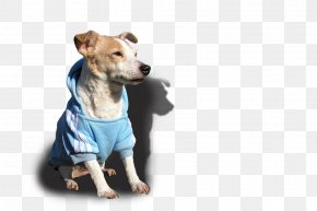 Puppy - Dog Breed Jack Russell Terrier Puppy Bulldog PNG