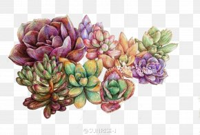 Plant - Succulent Plant Colored Pencil Watercolor Painting Leaf PNG