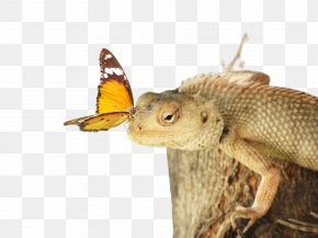 Moths And Butterflies Butterfly - Insect Reptile Dragon Lizard Lizard Butterfly PNG