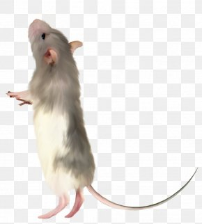 Mouse, Rat Image - Computer Mouse PNG
