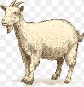 Goat - Goat Drawing Clip Art PNG