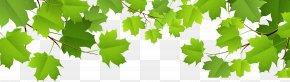 Decorative Leaves Transparent Clip Art Image - Leaf Clip Art PNG