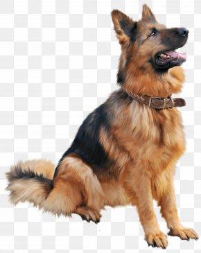 Dog 6 - Dog Clip Art PNG